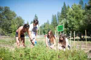 jewish summer camp partnership with nature
