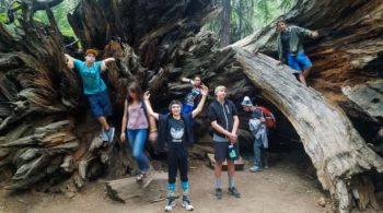 Redwoods site-seeing on the Magical Mystery quest