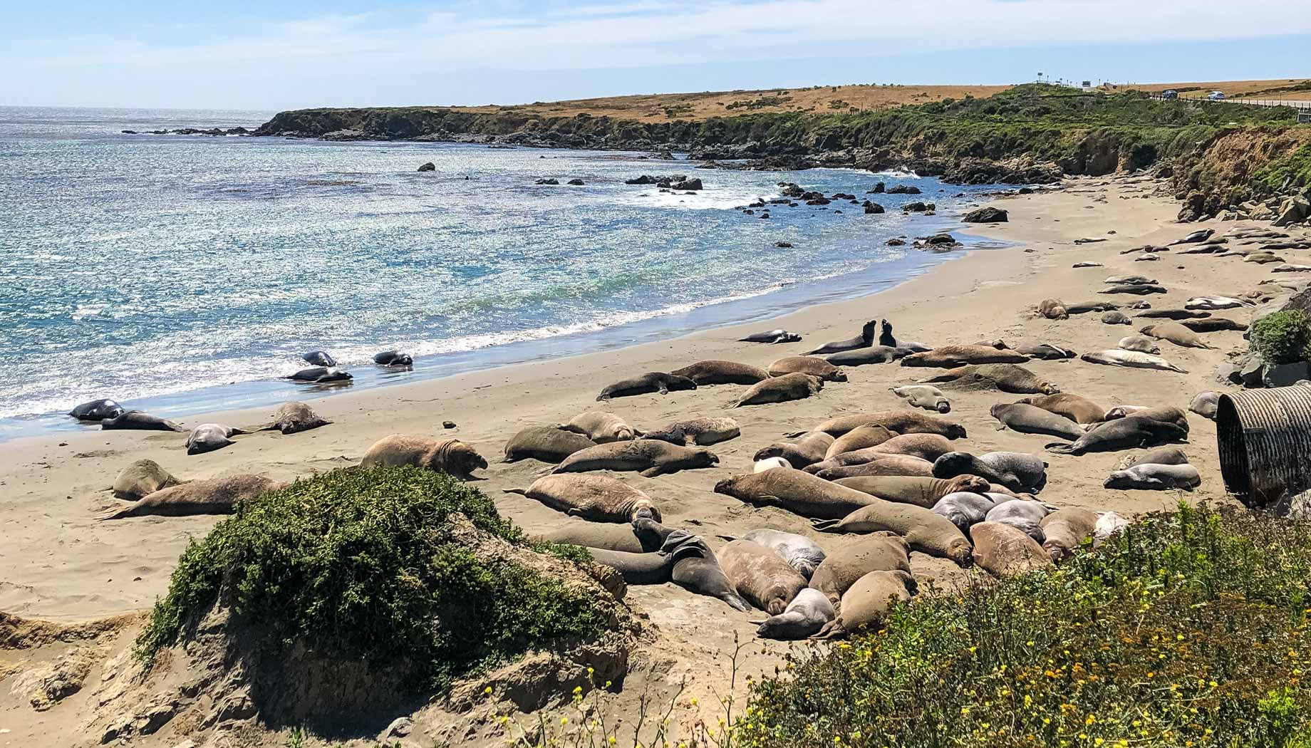 Sea lions sleeping on the beach on the Surf N Turf quest